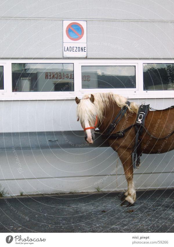 Pferde parken verboten! PKW laden entladen
