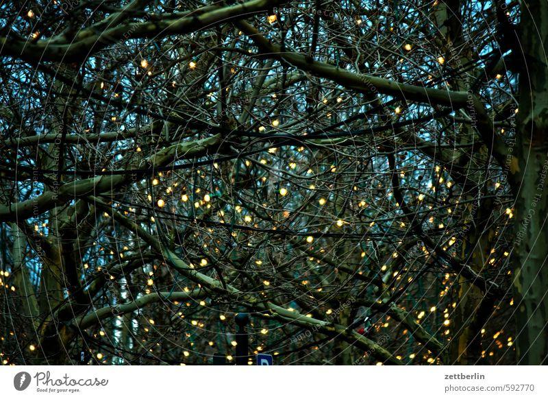 QDamm wallroth Licht Illumination Beleuchtung Strahlung Lichtstrahl Dekoration & Verzierung Party Partynacht Partikel Lichterkette Allee Baum Ast Zweig Abend