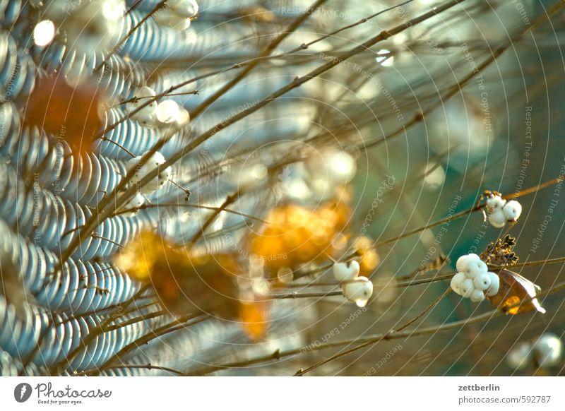MDZ wallroth Maschendrahtzaun Zaun Nachbar Grenze Grundstück Garten Trennung Herbst Winter Beeren schneebeere Natur Sträucher Ast Zweig Schwache Tiefenschärfe
