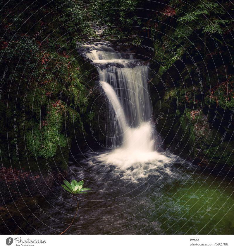 Stilles Rauschen Natur schön grün weiß Wasser Baum ruhig schwarz Wald Idylle weich Wasserfall