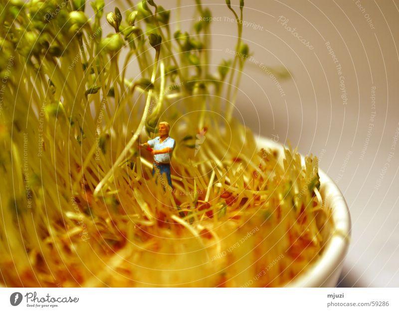 abschneiden Gesundheit Kräuter & Gewürze Ernte Bioprodukte Schlag geschnitten Gartenarbeit Landwirtschaft Kresse