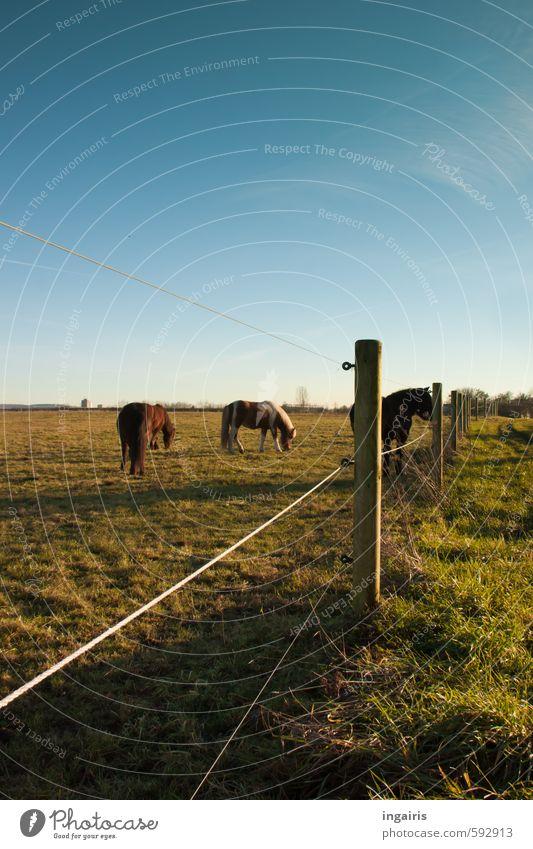 Weitblick Himmel Natur blau grün Landschaft Tier Wiese Gras Holz natürlich braun Horizont Stimmung Zusammensein leuchten warten