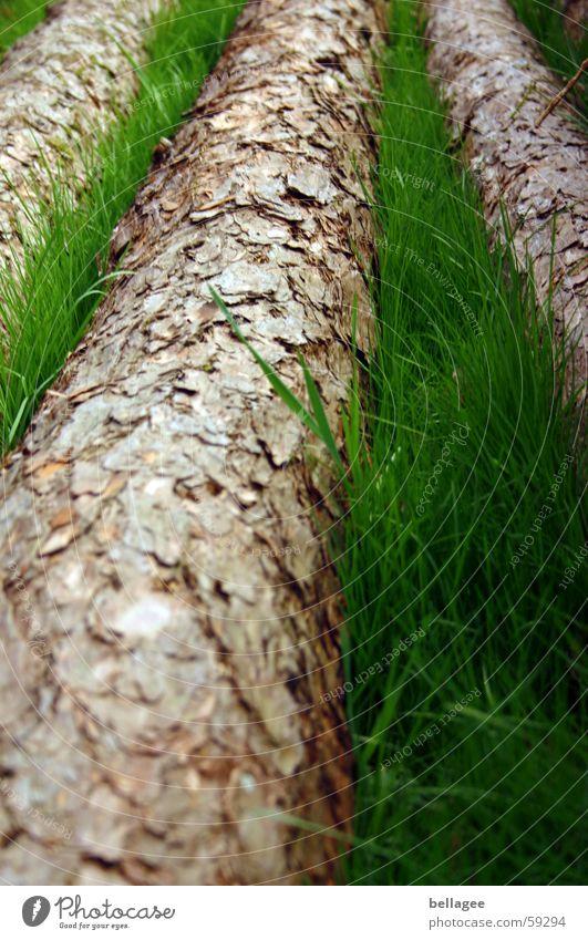 Stelldich zweier  Farben Baum grün Wiese Gras braun 3 liegen Baumstamm Halm saftig Baumrinde gefallen matt