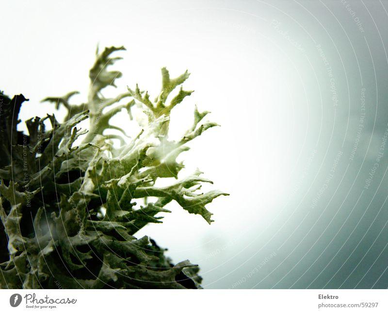 mit Ernst Haeckel auf Forschungsreise Natur Regen Algen Ordnung Wassertropfen Tropfen Nordsee Horn Pilz Moos Norwegen nordisch karg Flechten Flechten Nordseite