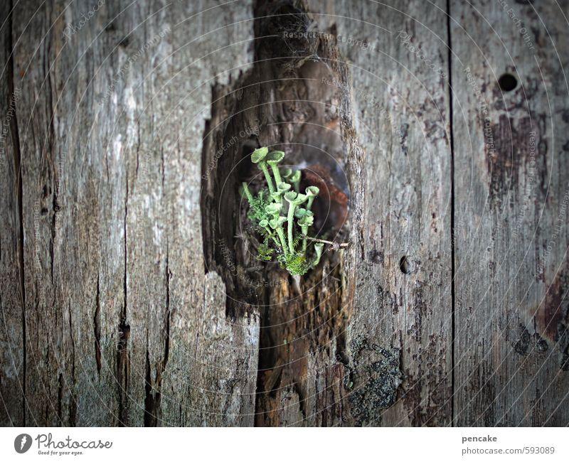 erstes 2014 | kammerkonzert Musik Konzert Bühne Orchester Natur Pflanze Urelemente Winter Baum Moos Flechten Trompetenflechte Wald Fenster Zeichen Fröhlichkeit