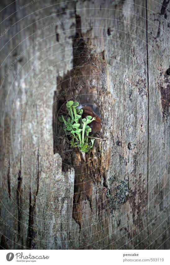 kuschelgruppe | nischendasein Natur grün Pflanze Winter Wald Holz mehrere Kommunizieren Urelemente beobachten Zeichen verstecken Moos Baumrinde Trompete Nische