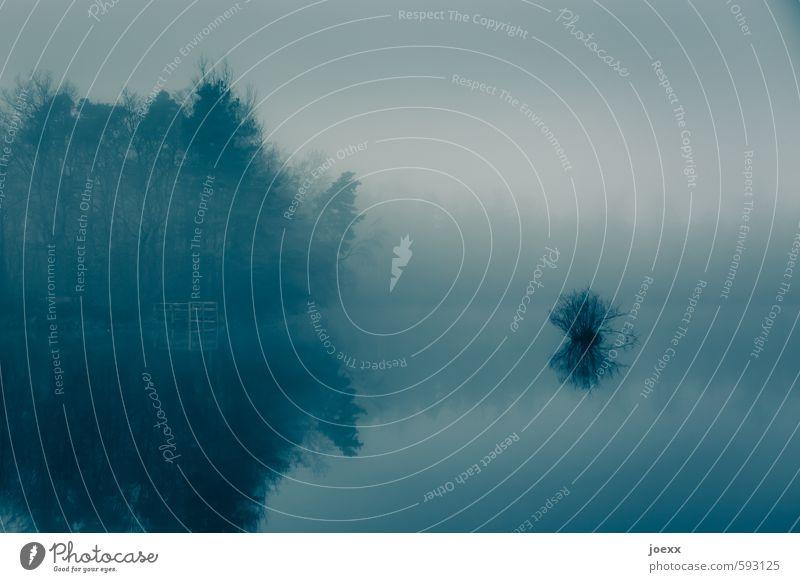 Das langsame Vergessen Natur Landschaft Horizont Herbst Wetter Nebel Wald See ästhetisch kalt blau Romantik ruhig Traurigkeit Tod Idylle Verfall Vergangenheit