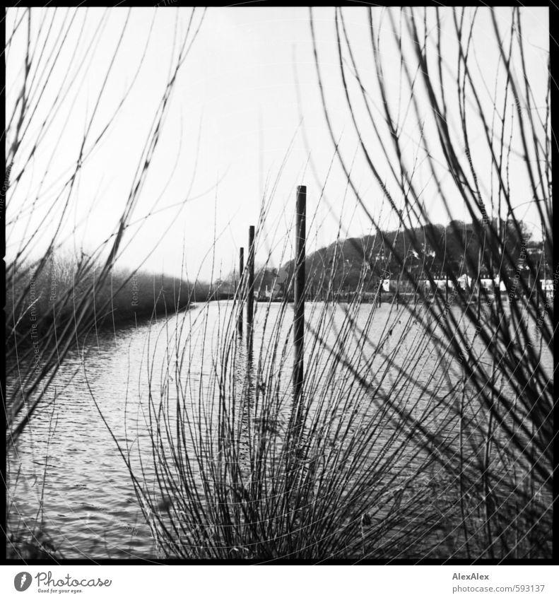 Hafen Wasser Pflanze ruhig Haus Umwelt Küste Horizont Freizeit & Hobby Idylle Sträucher ästhetisch Ausflug einfach Ast retro historisch