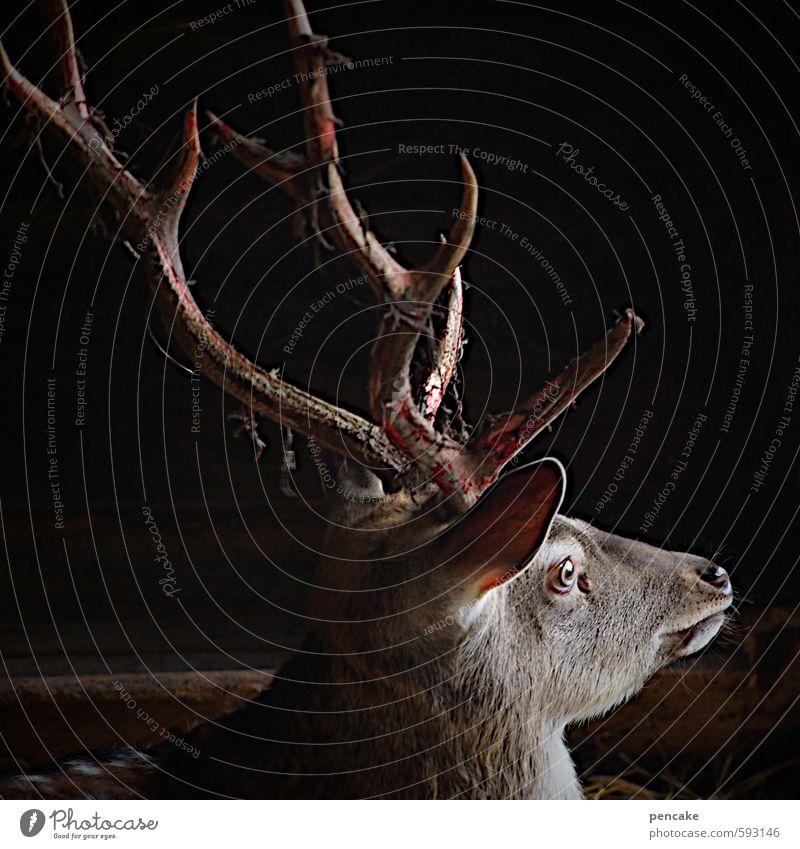 achtung wild! Natur Wald Tier Wildtier Tiergesicht Hirschkopf Hirsche 1 Zeichen beobachten Jagd Wachstum ästhetisch authentisch frei Leben Leichtigkeit Horn