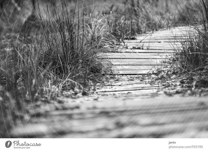 holzweg Pflanze Gras Sträucher Gelassenheit ruhig Hoffnung Zukunft Wege & Pfade Holzweg Laufsport gehen Richtung Schwarzweißfoto Außenaufnahme Menschenleer