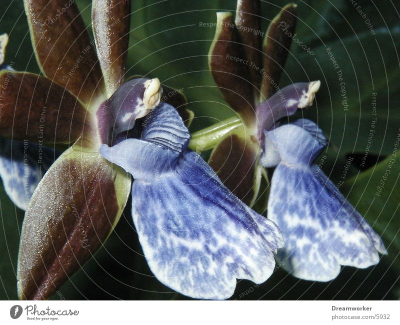 Blüte Pflanze Blüte 2 Urwald Duft exotisch Orchidee