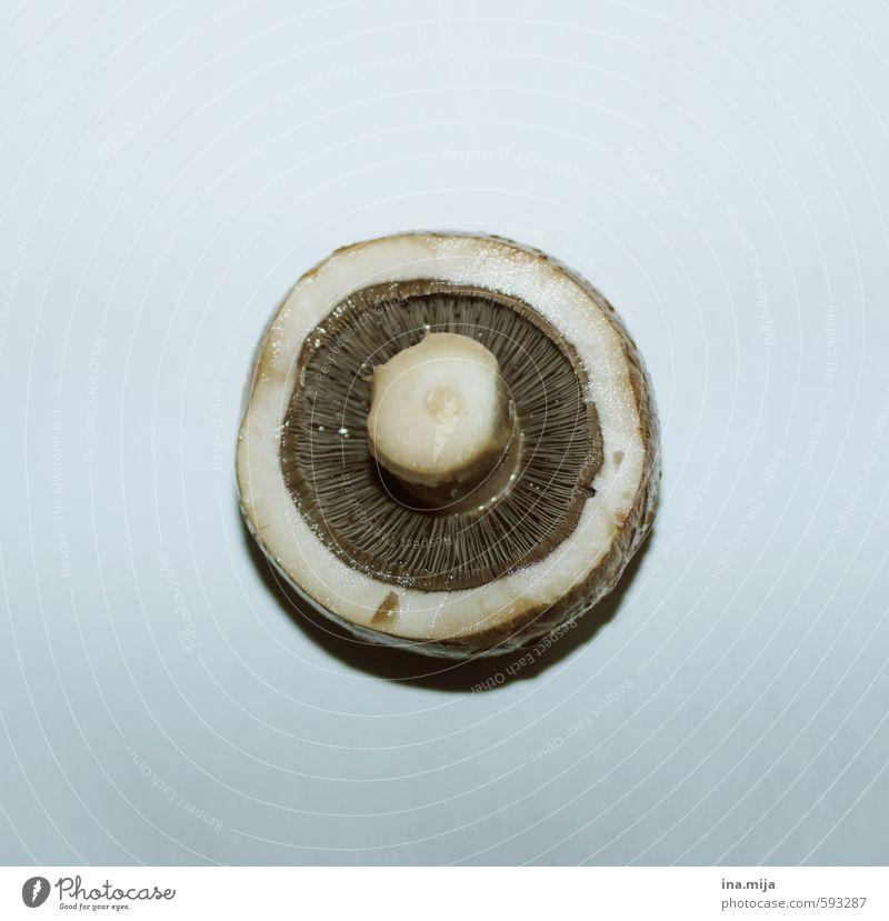 Der kleine Schwammerlkopf blau weiß Gesunde Ernährung grau Essen braun Lebensmittel Kochen & Garen & Backen rund Gemüse Bioprodukte Restaurant Pilz Fasten Diät