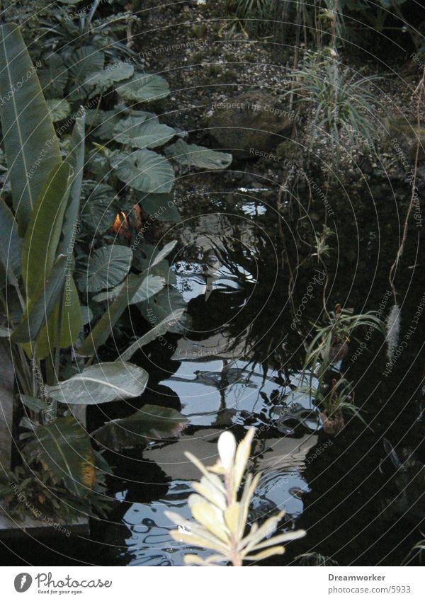 Pflanzenwelt Wald Wasser grün Natur Urwald Blatt