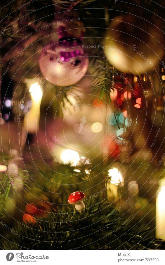 Pilz Weihnachten & Advent Baum glänzend leuchten sitzen Dekoration & Verzierung Weihnachtsbaum Tanne Weihnachtsdekoration Lichterkette Tannenzweig Baumschmuck