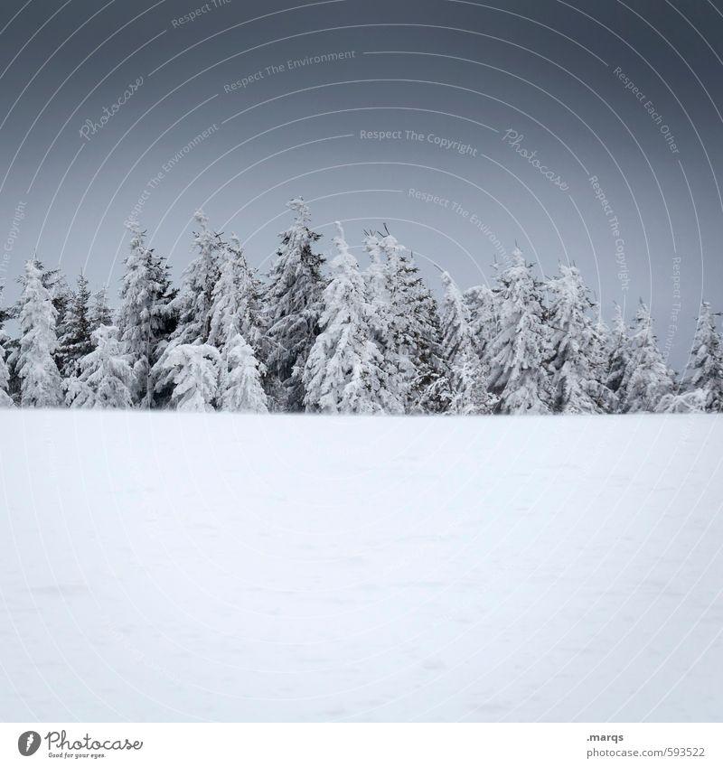 Versammlung Natur Ferien & Urlaub & Reisen Erholung Einsamkeit Landschaft Winter kalt Umwelt Schnee Ordnung Ausflug Klima einfach viele Nadelbaum Gewitterwolken