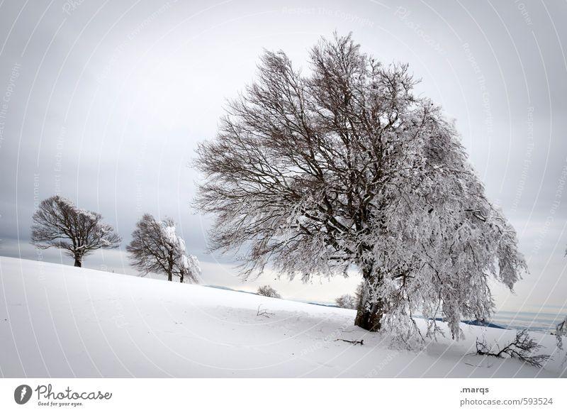 Starr Himmel Natur schön Baum Landschaft Wolken kalt Schnee natürlich Stimmung Eis Klima Ausflug Frost Zeichen Hügel