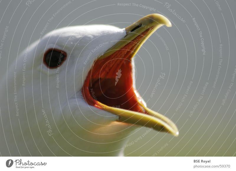 Möwenkopf Vogel Feder Möwe Schnabel Norwegen