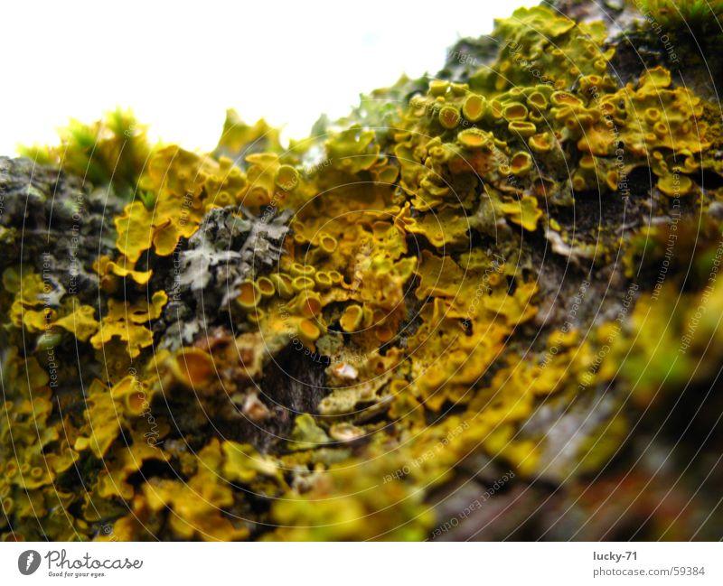 Moos Natur Baum Moos