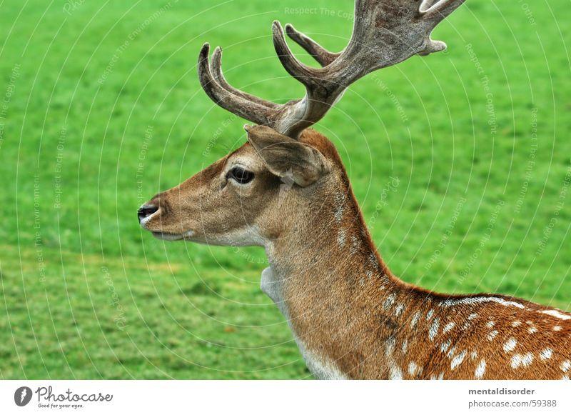 fleckenzwerg Natur weiß grün Blatt Auge Tier Ernährung Herbst Gras Stil klein Park braun Freizeit & Hobby Wildtier Rasen