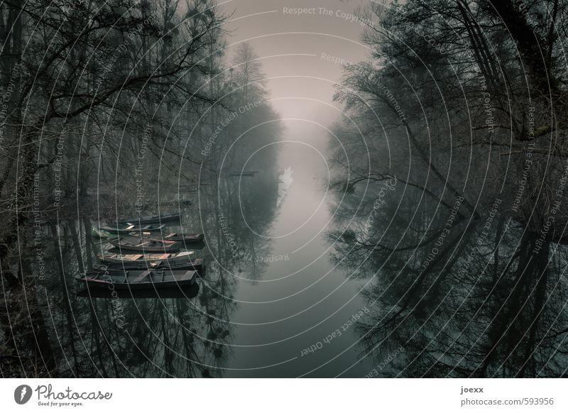 StillLeben Natur Wasser Himmel Herbst Winter schlechtes Wetter Nebel Baum Wald Fluss Altrhein Fischerboot Ruderboot alt dunkel trist braun grau schwarz weiß