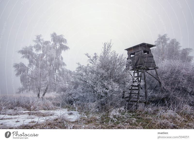 Rauher Reif Landschaft Himmel Wolken Winter Wetter schlechtes Wetter Nebel Schnee Pflanze Baum Gras Wiese Feld Wald grau grün weiß Hochstand Rauhreif Jagd