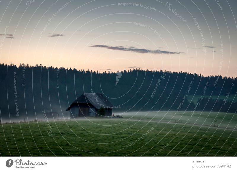 Guten Morgen Schwarzwald Himmel Natur alt schön Erholung Landschaft Wald Umwelt Wiese Frühling Horizont Nebel Idylle frisch Schönes Wetter Urelemente