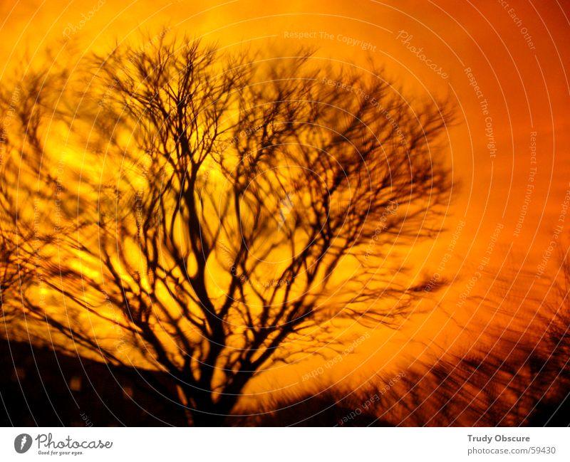 orange crush Ferne Baum Sträucher Unterholz Geäst Baumkrone Blatt schwarz Behälter u. Gefäße Erde Himmel buschwerk Ast astwerk blättchen büschel Kontrast Glas