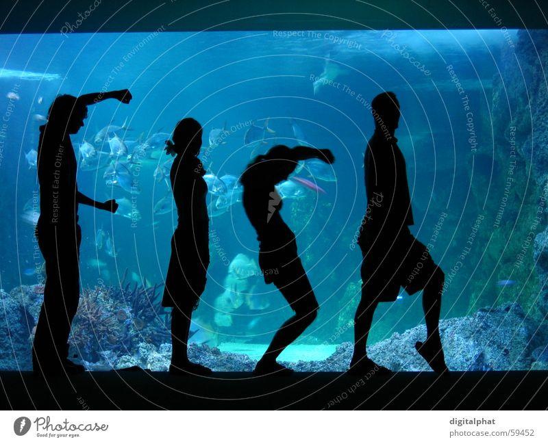Fish Fisch Tourismus Mensch 4 Wasser Zoo Aquarium blau schwarz Wort Buchstaben Farbfoto Schatten Gegenlicht Silhouette Englisch Körper Körperhaltung