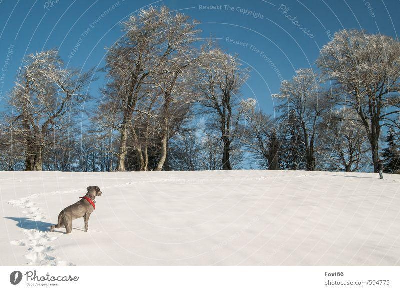 Spuren verfolgen.... Hund Himmel blau weiß Landschaft Freude Tier Winter kalt Berge u. Gebirge Wiese Schnee Bewegung Spielen braun Eis