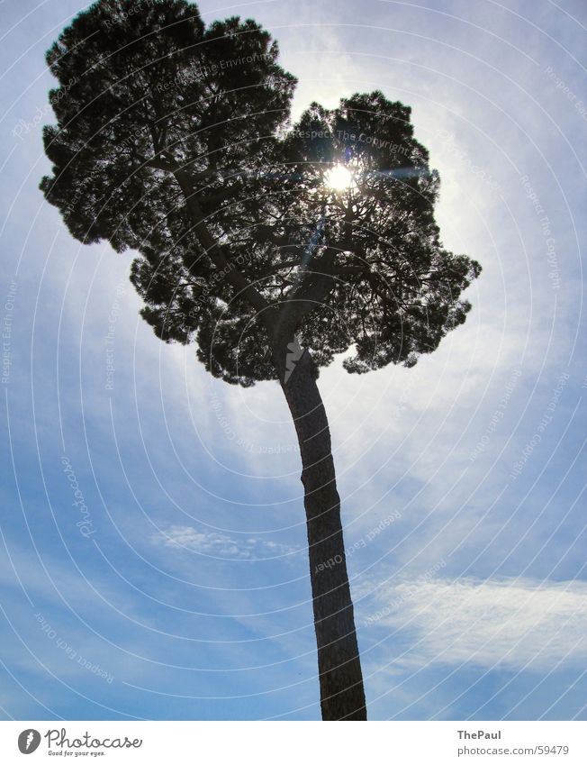 Strahlender Baum groß Wolken Licht Außenaufnahme Gegenlicht Natur Himmel blau Sonne Baumstamm Freude Schatten Lichtstrahl Aura