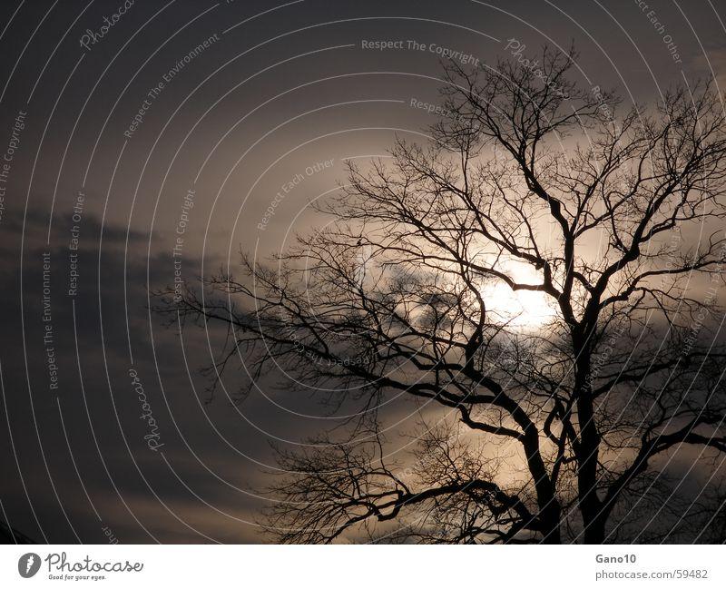 Midnightsun Baum Abenddämmerung dunkel Herbst Winter Hoffnung Flüssigkeit ruhig tree Sonne evening mood dark autumn Freude