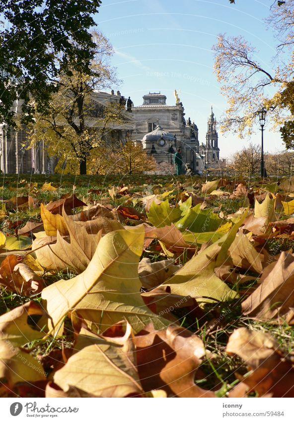Dresdner Herbst Blatt Dresden brühlsche terasse