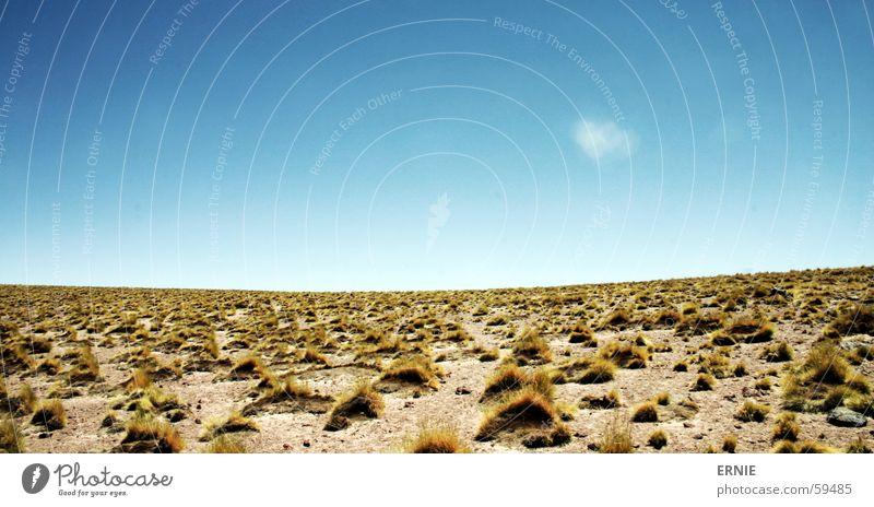 Unbenannt-1 Chile Ferien & Urlaub & Reisen Lago Miscanti San Pedro de Atacama Wolken weiß Gras Himmel blau