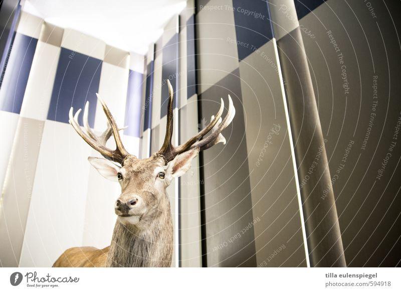 H_ _ _ _ _ gulasch Tier Wand Beleuchtung Wildtier Tiergesicht Horn Hirsche Originalität Totes Tier ausstellen Tierpräparat