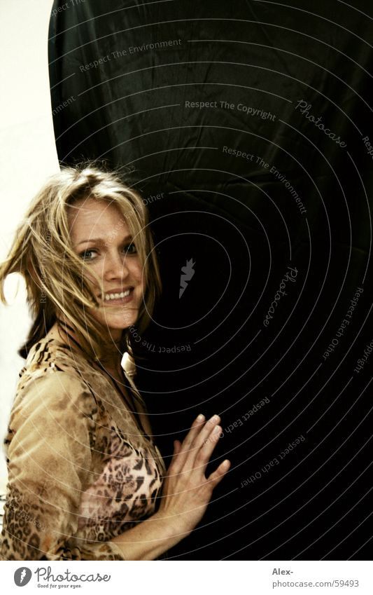 Rückenwind Frau schön Wand Haare & Frisuren lachen Mode blond Lächeln einzeln Freundlichkeit langhaarig Frauengesicht Haarsträhne Bluse Tigerfellmuster Frauenoberkörper