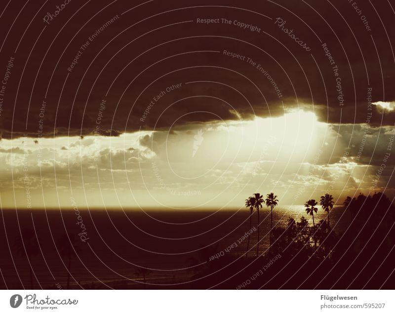 Mitten im Paradies Schwimmen & Baden Ferien & Urlaub & Reisen Tourismus Ausflug Abenteuer Ferne Freiheit Sommer Sommerurlaub Sonne Sonnenbad Strand Meer Insel