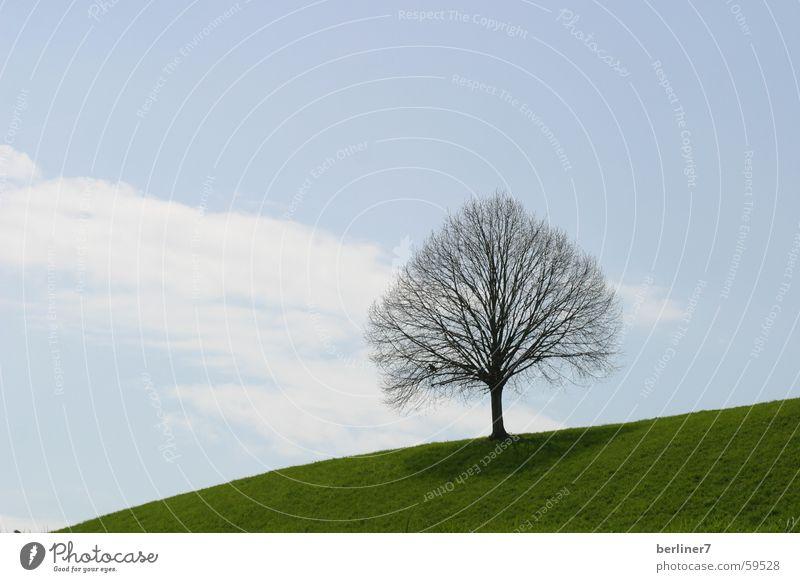 blattloser Baum im Frühling Himmel grün blau Wolken Wiese Gras Ast Hügel