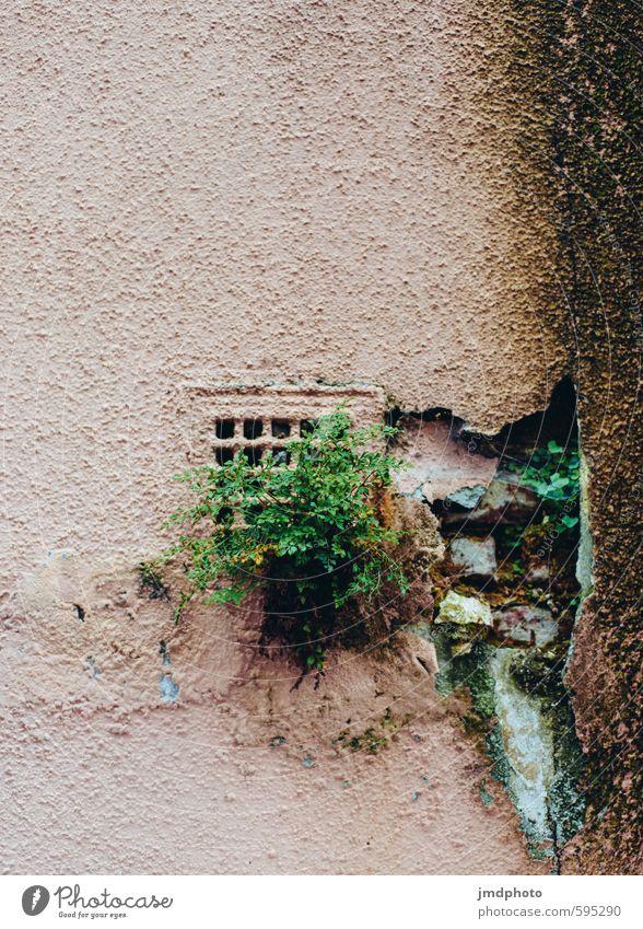 When Nature strikes back! Stadt Pflanze Sommer Blatt Haus Umwelt Wand Senior Gras Gebäude Mauer Fassade Sträucher Klima Wachstum
