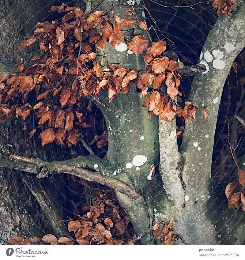 burn-out Natur Baum rot Landschaft Winter Wald Herbst Zeichen Jahreszeiten trocken Erschöpfung welk Buche Herz-/Kreislauf-System Winterschlaf Buchenblatt