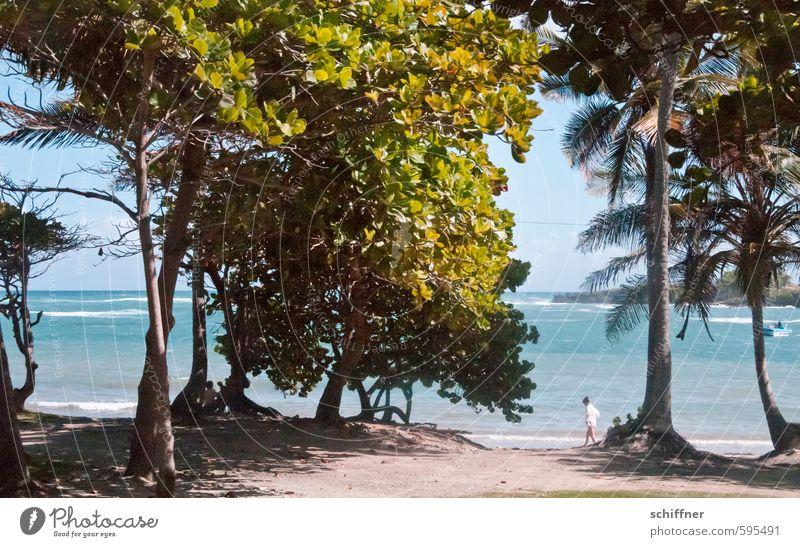 Hängemattenvorrichtung Natur Landschaft Pflanze Baum Grünpflanze exotisch Wellen Strand Riff Meer Insel grün türkis Strandleben Strandanlage Palme Palmenwedel