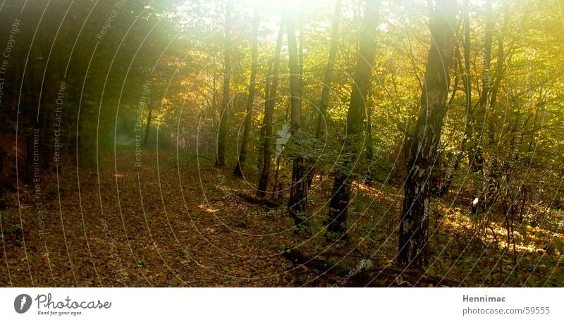 Vergoldeter Wald. Baum Sonne Einsamkeit Blatt Farbe Wald Erholung gelb kalt Herbst Holz Wege & Pfade Luft träumen Beleuchtung braun