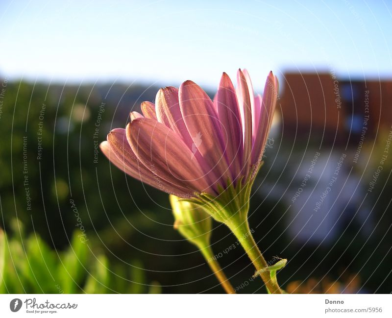 Im Namen der Tulpe Blume Gebäude Tulpe Brennpunkt