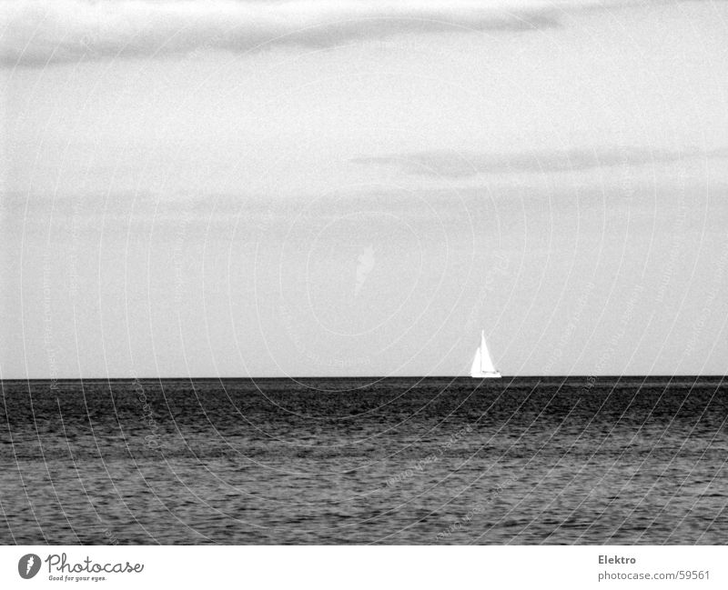 It will grow back like a Starfish! Meer ruhig Ferne See Wasserfahrzeug Wind Horizont leer Sturm Segel Segelboot Wassersport Fischer Strömung Regatta Jolle