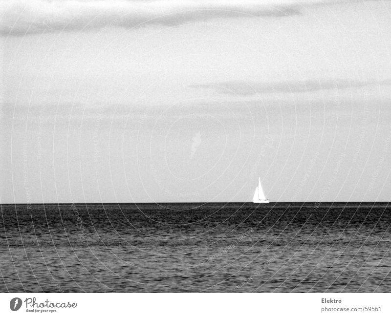It will grow back like a Starfish! Meer See Wasserfahrzeug Segel Jolle Strömung Sturm Wind Horizont Regatta ruhig Ferne Segelboot leer Fischer Wassersport
