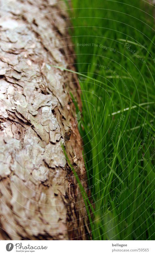 Baum&Gras grün braun frisch Baumstamm Baumrinde