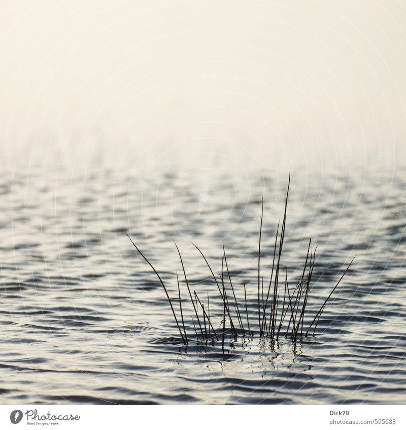 Erstes 2014 | Abgesoffen blau weiß Wasser Pflanze nackt Blatt Winter schwarz Wiese Gras grau Stil Schwimmen & Baden See Wellen elegant