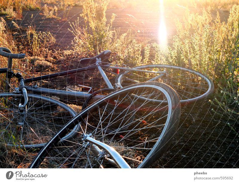 fahrradliebe Fahrrad Rad Herbst Sonne Berlin-Tempelhof Gras Wiese Abendsonne Licht Natur Baum Nachmittag Verkehrsmittel Rennrad