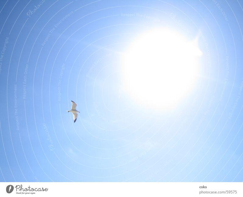 flying to the sun Himmel Sonne blau Ferne Freiheit Vogel fliegen Luftverkehr Blauer Himmel