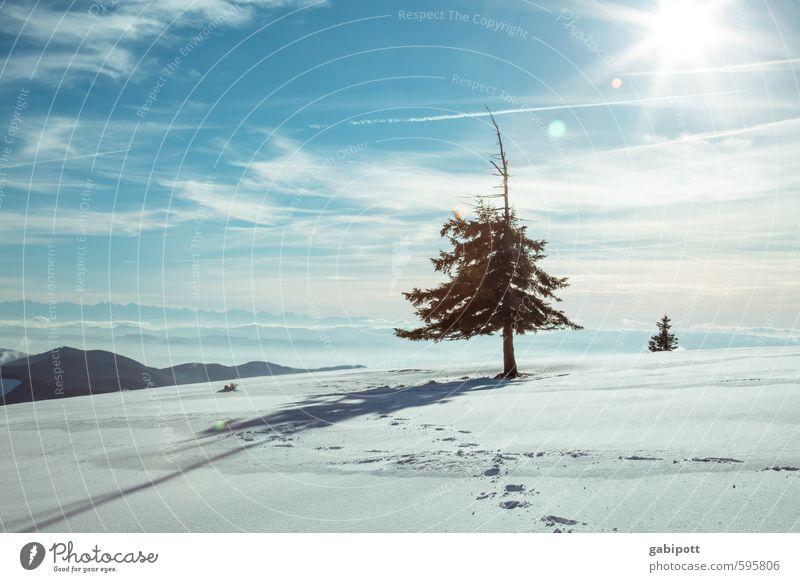 Tschüß Winter Umwelt Natur Landschaft Himmel Sonne Wetter Schönes Wetter Schnee Pflanze Baum Tanne Freundlichkeit kalt blau weiß Lebensfreude