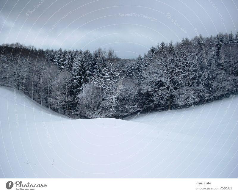 winter Farbfoto Außenaufnahme Textfreiraum oben Textfreiraum unten Tag Kontrast Zentralperspektive harmonisch Winter Schnee Natur Landschaft Wolken Wetter